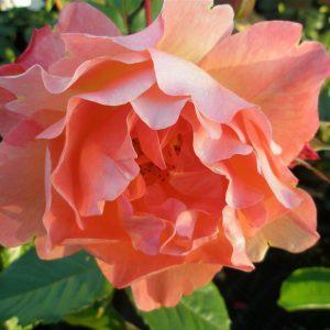 op-de-dijk-en-bloemen-058