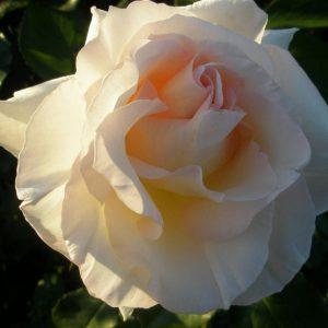 op-de-dijk-en-bloemen-059