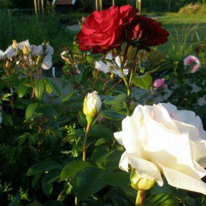 op-de-dijk-en-bloemen-061